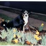 Gunther (3/1994 - 11/2007)